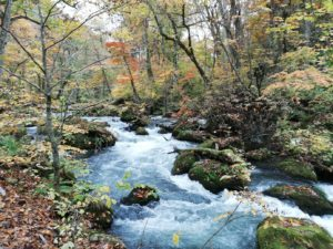 マイナスイオンを全身にチャージ!大自然をたっぷり感じることができる「奥入瀬渓流」
